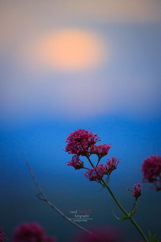 fleur sunset usson